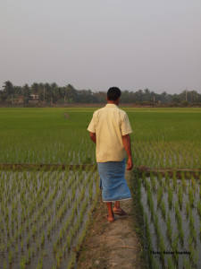 Walking the rice fields for 5000 years.